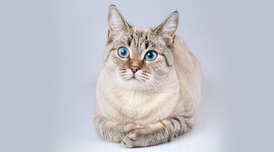 Can glucosamine be harmful to cats?