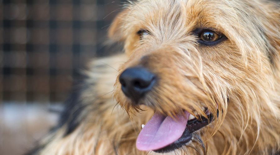 What can I give my dog for joint pain?