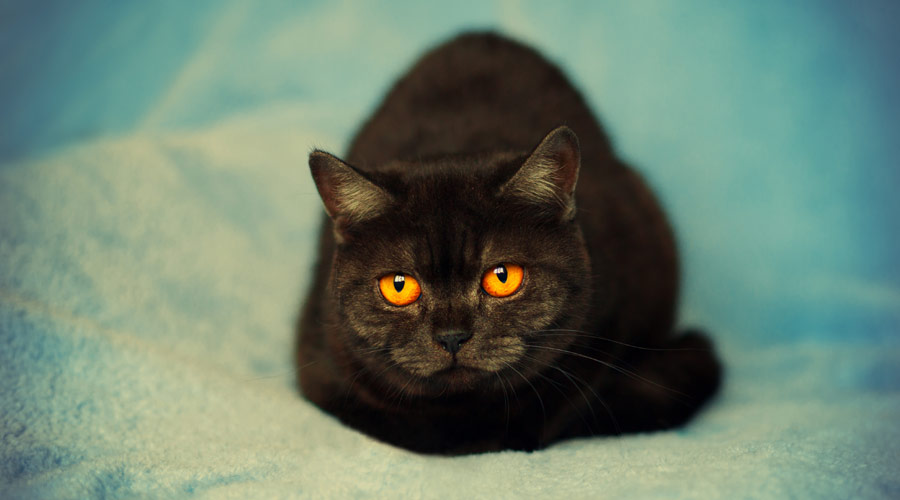 What are the general side effects of Green Lipped Mussel Extract in Cats?