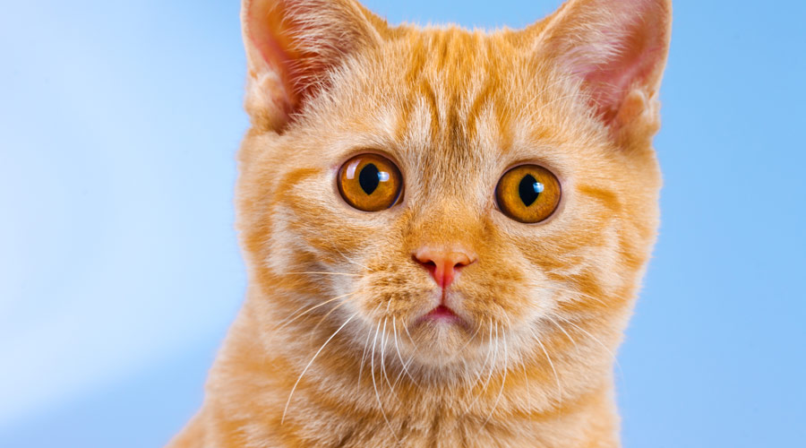 Does glucosamine have side effects in cats?