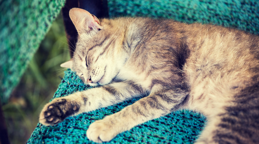 What can I do to help prevent joint injuries in my cat?