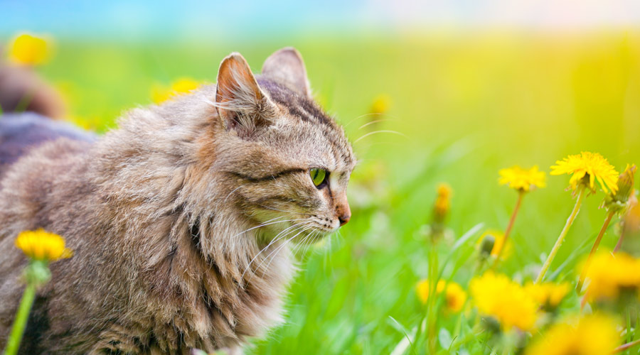 What are the Benefits of Omega3 Fish Oil to Your Cat's Health?
