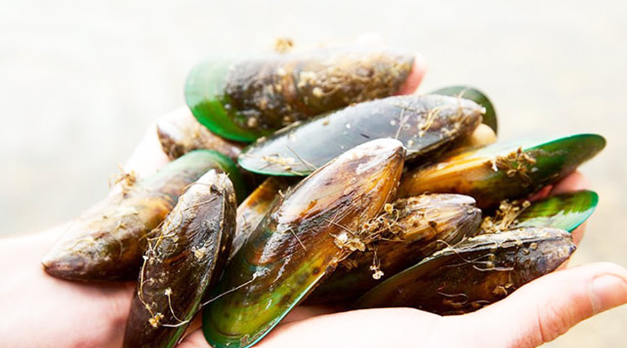 Why green lipped mussel extract is the best joint supplement for dogs?